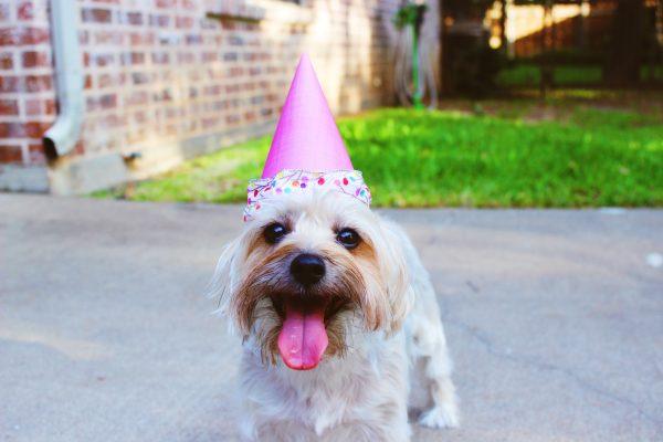 lustiger-hund-richtfest-geschenk